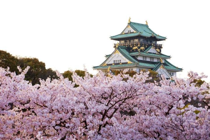 Osaka-Castle-Sakura-Ultimate-Cherry-Blossoms-Japan-Guide